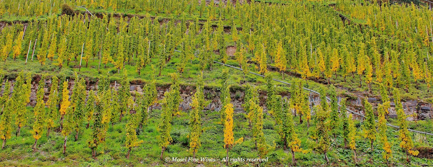 Vintage Report Mosel 2015 | Vineyard Autumn | Photo